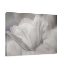Leinwandbild White Tulips Tulpen Blumen Blumenranke weiß grau Natur Pflanze | no. 98