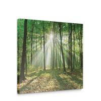 Leinwandbild Laubbaum Laubwald Sonne Sonnenstrahlen | no. 3285
