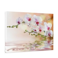 Leinwandbild Orchidee Blumen Blumenranke Weiß Pink Natur Pflanzen Abstrakt | no. 200
