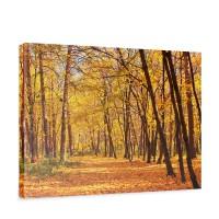 Leinwandbild Autumn Forest Herbstblätter Wald Bäume Baum Forest Herbst | no. 84