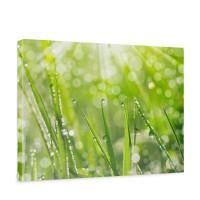 Leinwandbild Gras Halm Grün Wiese Sonne Natur | no. 199