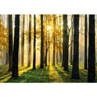 Fototapete Sunlight Forest II Wald Tapete Wald Bäume Sonnenstrahlen grün Ruhe grün | no. 62