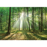 Fototapete Wald Tapete Laubbaum, Laubwald, Sonne, Sonnenstrahlen natural | no. 3285
