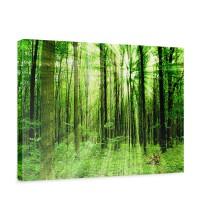 Leinwandbild Sunlight Forest Wald Bäume Sonnenstrahlen grün Ruhe | no. 61