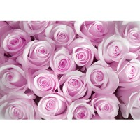 Fototapete Blumen Tapete Blumen Rose Blüten Natur Liebe Love Blüte Pink pink | no. 186