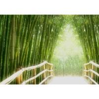 Fototapete Bamboo Walk Wald Tapete Bambusweg Bambuswald Dschungel Asien Bamboo Way Wald grün | no. 2