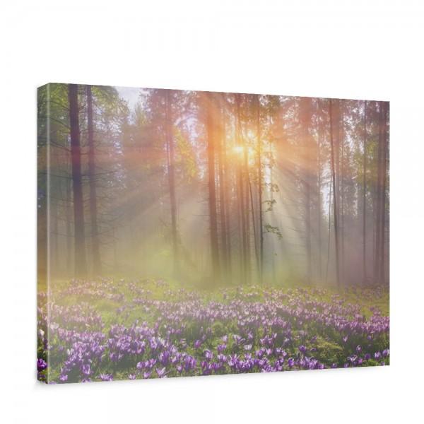 Leinwandbild Wald Bäume Natur Baum grün Sonne | no. 239