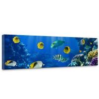 Leinwandbild Underwater World Aquarium Unterwasser Meer Fische Riff Korallenriff | no. 33