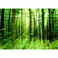 Fototapete Sunlight Forest Wald Tapete Wald Bäume Sonnenstrahlen grün Ruhe grün | no. 61