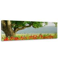 Leinwandbild A Beautiful Tree Natur Mohn Feld Baum Wald Bäume rot grün Idyll | no. 90