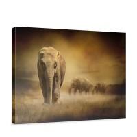 Leinwandbild African Savanna Afrika Savanne Elefant Elefanten Gras Landschaft | no. 11