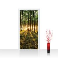 Türtapete - Wald Bäume Sonne Schatten | no. 928