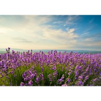 Fototapete Pflanzen Tapete Natur Feld Himmel Wolken Grün Idyll beige | no. 205