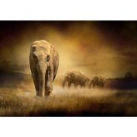 Fototapete African Savanna Afrika Tapete Afrika Savanne Elefant Elefanten Gras Landschaft braun | no. 11