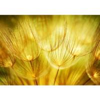 Fototapete Dandelion Dreams Pflanzen Tapete Pusteblume Löwenzahn Ocker gelb beige ocker | no. 73