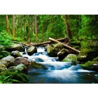 Fototapete Waterfall Woods Wald Tapete Wald Wasserfall Natur Baum grün grün | no. 31