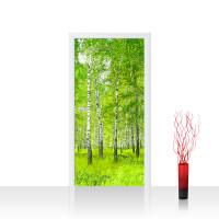 Türtapete - Sunny Birch Forest Birkenwald Bäume Wald Sonne Birke Gras Natur Baum | no. 112