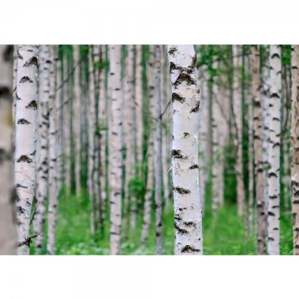 Fototapete Birch Forest II Wald Tapete Birkenwald 3D Perspektive Birke Stämme Wald grün   no. 81