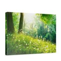 Leinwandbild Sunny Forest Wald Bäume Natur Baum grün | no. 30