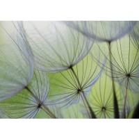 Fototapete Blumen Tapete Pusteblume Blüte Blume Geflecht Netz Streifen grün | no. 829