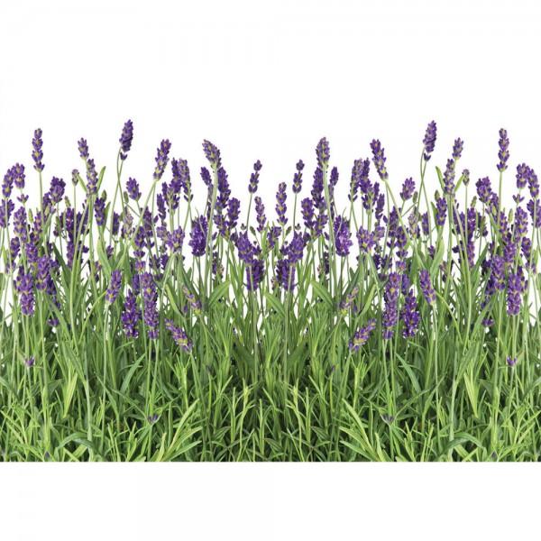 Fototapete Natur Tapete Lavendel Pflanze Wiese Blüten grün   no. 612