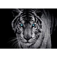 Fototapete Tiere Tapete Tiger Gesicht Auge blau schwarz-weiß blau | no. 426