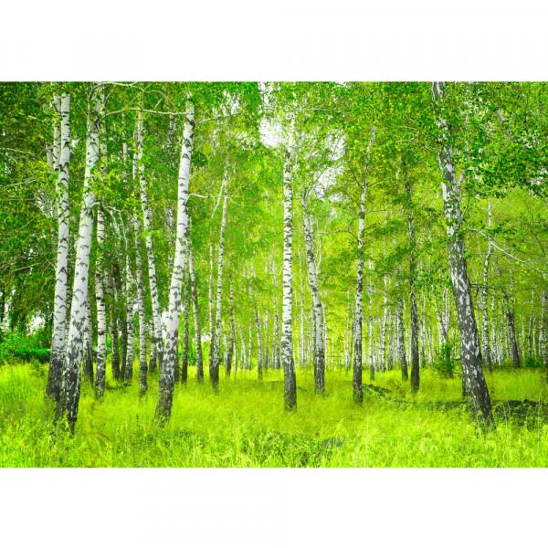 Fototapete Sunny Birch Forest Wald Tapete Birkenwald Bäume Wald Sonne Birke Birken Gras Natur Baum grün | no. 112