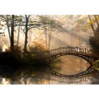 Fototapete Wald Tapete Wald Wasser Bäume Herbst Natur Sonne weiß | no. 264