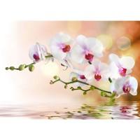 Fototapete Berge Tapete Orchidee Blumen Blumenranke Weiß Pink Natur Pflanzen Abstrakt grau | no. 200