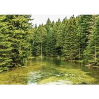 Fototapete Natur Tapete Bäume Wald Fluss Wasser Natur grün | no. 1616
