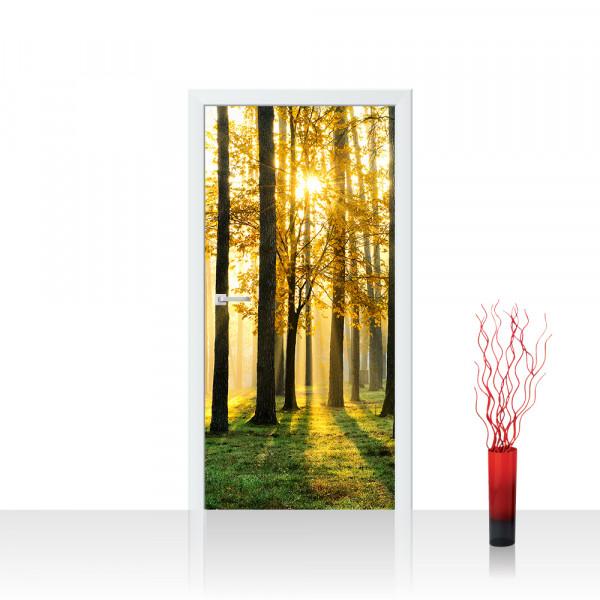 Türtapete - Sunlight Forest II Wald Bäume Sonnenstrahlen grün Ruhe | no. 62
