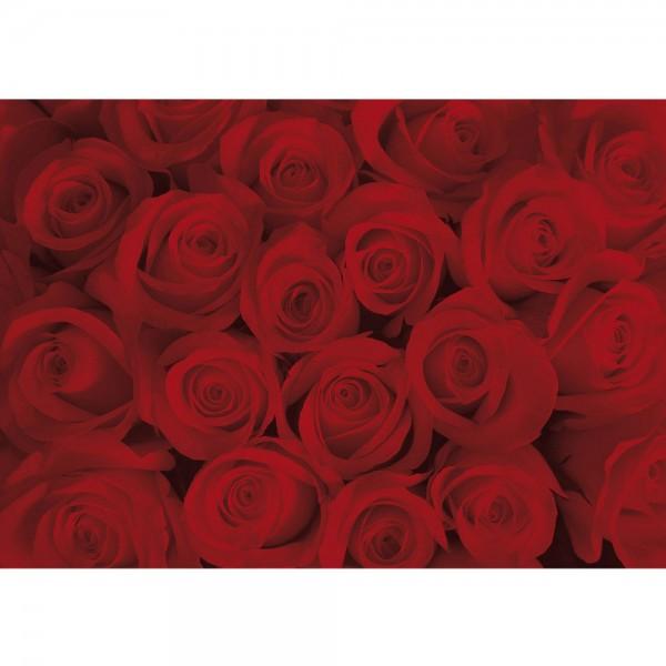 Fototapete Blumen Tapete Rosen Blüten Blumen rot   no. 726