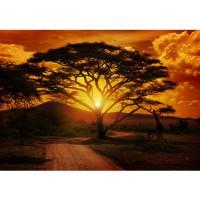 Fototapete African Sunset Sonnenuntergang Tapete Sonnenaufgang Afrika Steppe Giraffe Orange Safari orange | no. 59
