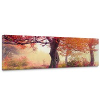 Leinwandbild Wald Bäume Natur Baum Sonne | no. 242