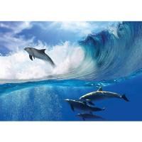 Fototapete Meer Tapete Delfin Meer Welle Tropfen Sonne Wasser blau | no. 531