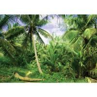 Fototapete Natur Tapete Palmen Strand Tropisch Ausblick Pflanzen grün | no. 4485