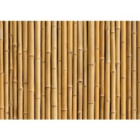 Fototapete Golden Bamboo Bambus Tapete Bambus Wald Bambuswald Dschungel Garten Natur tropisch Bäume beige | no. 83