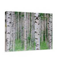 Leinwandbild Birch Forest II Birkenwald 3D perspektive Birke Stämme Wald | no. 81