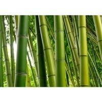 Fototapete Paradies of Bamboo Bambus Tapete Bambus Wald Bambuswald Dschungel Garten Natur tropisch Bäume grün | no. 75