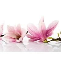 Fototapete Berge Tapete Orchidee Blumen Blumenranke Rosa Natur Pflanzen Abstrakt beige | no. 202