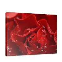 Leinwandbild A perfect Rose Blumen Rose Blüten Natur Liebe Love Blüte | no. 24