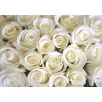 Fototapete Blumen Tapete Blumen Rose Blüten Natur Liebe Love Blüte Weiß weiß | no. 184