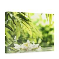 Leinwandbild Blüte Natur Wasser Grün Wald | no. 196