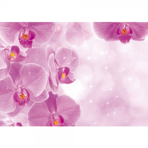 Fototapete Orchideen Tapete Orchidee Tropfen Rosa Wellness lila lila   no. 407