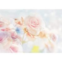 Fototapete Blumen Tapete Blüten Blätter Rose weiß | no. 2132