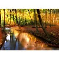 Fototapete Wald Tapete Wald Bäume Natur Sonne Wasser grau | no. 252