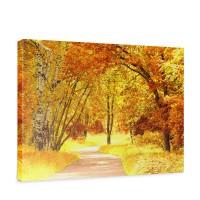 Leinwandbild Autumn Leaves Herbstblätter Wald Bäume Baum eg Forest Herbst | no. 79