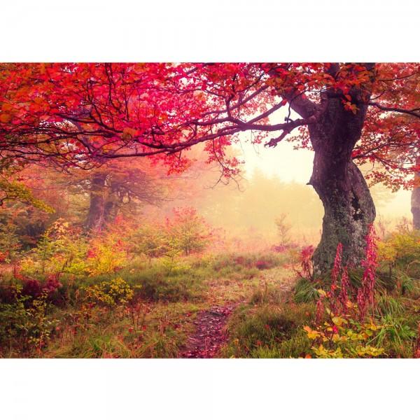 Fototapete Wald Tapete Wald Bäume Herbst Natur Sonne beige   no. 258