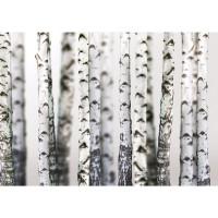 Fototapete Natur Tapete Bäume Birken Wald Stamm weiß | no. 2111