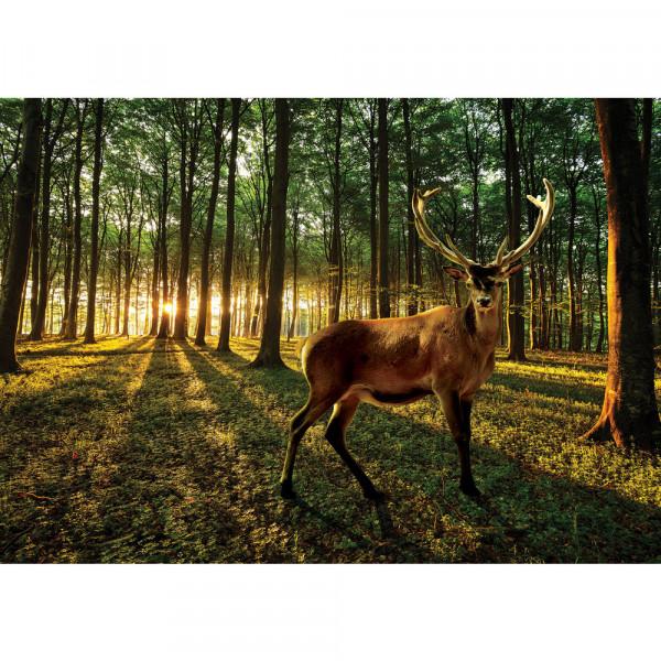 Fototapete Wald Tapete Wald Bäume Sonnenaufgang Schatten Hirsch Wiese Geweih grün | no. 928